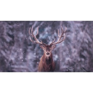 Cerf en photo plexiglass