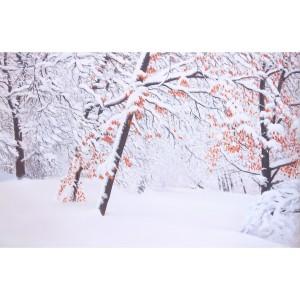 Tableau début d'hiver en forêt