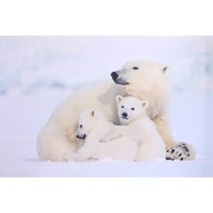 Tableau photo imprimée maman ours et ses petits