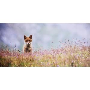 Impression sur dibond renard curieux en photo