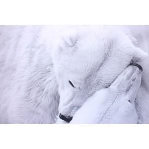 Impression sur dibond couple d'ours