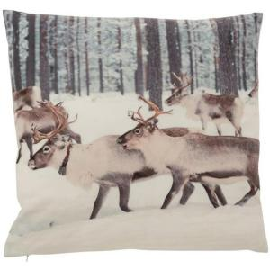 Coussin rennes