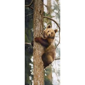 Tableau ours brun grimpeur