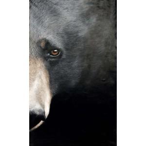 Tableau ours à collier