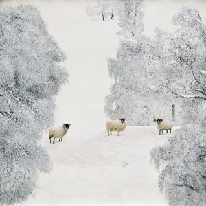 Tableau blanc moutons  dans la neige