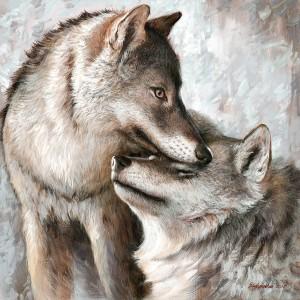 Couple de loup
