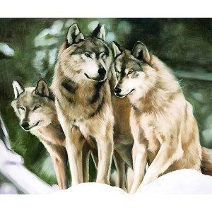Toile sur chassis 3 loups blanc