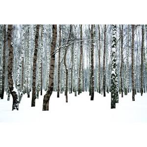 Tableau foret dans la neige