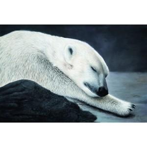 Toile sur chassis ours blanc endormi