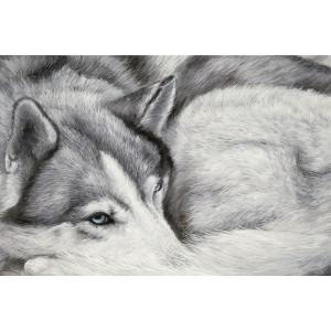Toile sur chassis husky dormeur