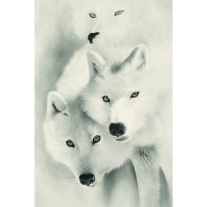 Toile sur chassis loups blanc
