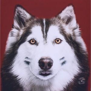 Tableau husky rouge